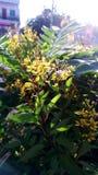 Φύλλα και λουλούδια με το φως Στοκ Φωτογραφίες