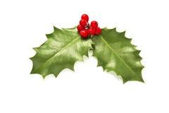 Φύλλα και μούρα της Holly Στοκ Φωτογραφίες