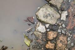Φύλλα και πέτρες στη λακκούβα φθινοπώρου Στοκ Εικόνα