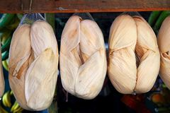 φύλλα καλαμποκιού σπαδί&kap Στοκ Φωτογραφίες