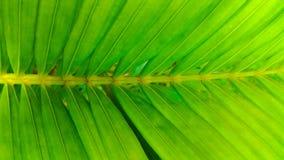 Φύλλα καρύδων Στοκ Εικόνα