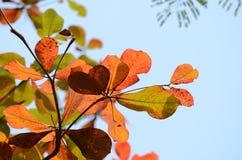 Φύλλα καφετιά και ουρανός πρίν πέφτει στο έδαφος Στοκ Φωτογραφία