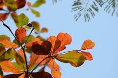 Φύλλα καφετιά και ουρανός πρίν πέφτει στο έδαφος Στοκ Εικόνες