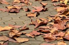 Φύλλα καφετιά και ουρανός πρίν πέφτει στο έδαφος Στοκ φωτογραφία με δικαίωμα ελεύθερης χρήσης