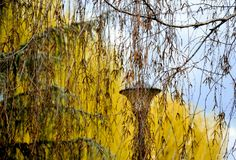 φύλλα κλάδων Στοκ φωτογραφίες με δικαίωμα ελεύθερης χρήσης