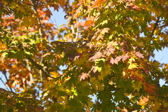 φύλλα κλάδων στοκ εικόνες