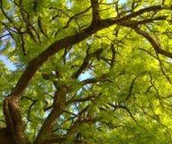 φύλλα κλάδων Στοκ Φωτογραφίες