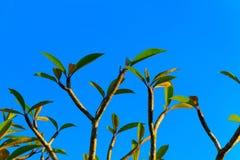 φύλλα κλάδων Στοκ φωτογραφία με δικαίωμα ελεύθερης χρήσης