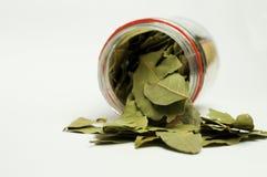φύλλα κόλπων Στοκ εικόνα με δικαίωμα ελεύθερης χρήσης