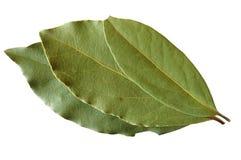 φύλλα κόλπων Στοκ Φωτογραφίες