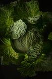 φύλλα λάχανων Στοκ Φωτογραφίες