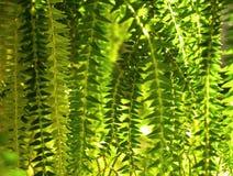 φύλλα λεπτομερειών Στοκ Φωτογραφία