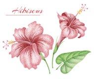 φύλλα λουλουδιών τροπ&iota hibiscus Στοκ φωτογραφίες με δικαίωμα ελεύθερης χρήσης