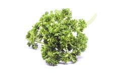 Φύλλα μαϊντανού για να είναι συστατικά τροφίμων Στοκ Φωτογραφία
