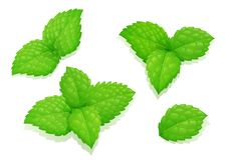 Φύλλα μεντών Καθορισμένο φυσικό προϊόν αρώματος Στοκ Εικόνες