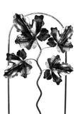φύλλα μεταλλικά στοκ εικόνες