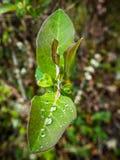 Φύλλα με τις σταγόνες βροχής στο δάσος στοκ εικόνες