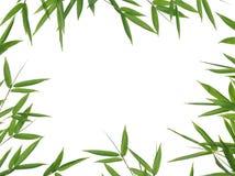φύλλα μπαμπού Στοκ εικόνα με δικαίωμα ελεύθερης χρήσης