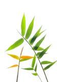φύλλα μπαμπού Στοκ φωτογραφίες με δικαίωμα ελεύθερης χρήσης