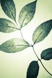 φύλλα μυστικά Στοκ εικόνα με δικαίωμα ελεύθερης χρήσης
