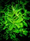 Φύλλα νέου στοκ φωτογραφία με δικαίωμα ελεύθερης χρήσης