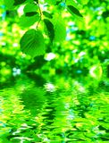 φύλλα πέρα από το ύδωρ Στοκ φωτογραφία με δικαίωμα ελεύθερης χρήσης