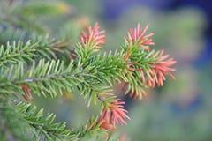 Φύλλα πεύκων στον κήπο Στοκ εικόνες με δικαίωμα ελεύθερης χρήσης