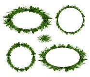 φύλλα πλαισίων μπαμπού διανυσματική απεικόνιση