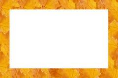 φύλλα πλαισίων που γίνοντ&a Στοκ Εικόνες