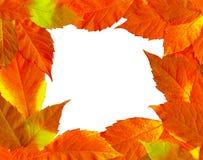 φύλλα πλαισίων πτώσης Στοκ εικόνα με δικαίωμα ελεύθερης χρήσης