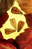 φύλλα πλαισίων σύνθεσης φ Στοκ φωτογραφία με δικαίωμα ελεύθερης χρήσης