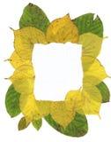 φύλλα πλαισίων φθινοπώρου Στοκ Φωτογραφίες
