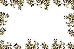 φύλλα πλαισίων φθινοπώρο&upsi στοκ φωτογραφία