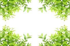 φύλλα πλαισίων απεικόνιση αποθεμάτων