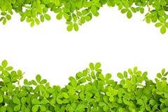 φύλλα πλαισίων Στοκ εικόνα με δικαίωμα ελεύθερης χρήσης