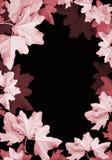 φύλλα πλαισίων Στοκ φωτογραφίες με δικαίωμα ελεύθερης χρήσης