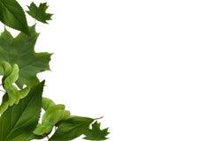 φύλλα πλαισίων Στοκ Εικόνες