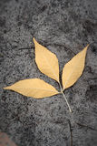 φύλλα που χάνονται Στοκ φωτογραφία με δικαίωμα ελεύθερης χρήσης