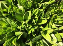 Φύλλα πράσινου φυτού στο έδαφος στο θερινό κήπο στοκ φωτογραφίες με δικαίωμα ελεύθερης χρήσης
