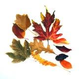φύλλα πτώσης διεσπαρμένα Στοκ Φωτογραφία