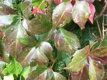 Φύλλα πτώσης με τις πτώσεις βροχής σε τους έξω υπαίθρια στοκ εικόνα