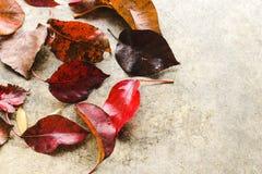 Φύλλα πτώσης στο συγκεκριμένο υπόβαθρο Στοκ Εικόνα
