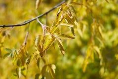 φύλλα πτώσης φθινοπώρου στοκ εικόνες με δικαίωμα ελεύθερης χρήσης
