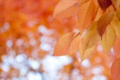φύλλα πτώσης Στοκ εικόνες με δικαίωμα ελεύθερης χρήσης