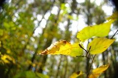 φύλλα πτώσης Στοκ Εικόνες