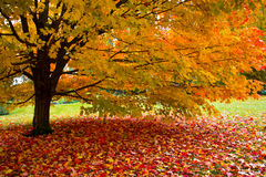 φύλλα πτώσης Στοκ Φωτογραφίες
