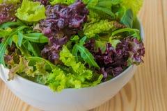 Φύλλα σαλάτας, πορφυρό μαρούλι, σπανάκι, arugula Μικτό φρέσκο sala Στοκ φωτογραφίες με δικαίωμα ελεύθερης χρήσης