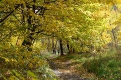 Φύλλα σε ένα δάσος που γίνεται κίτρινο για το φθινόπωρο στοκ εικόνα