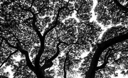 Φύλλα σκιαγραφιών των κλάδων δέντρων Στοκ εικόνες με δικαίωμα ελεύθερης χρήσης