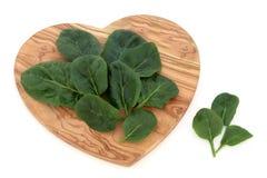 Φύλλα σπανακιού Στοκ Φωτογραφία